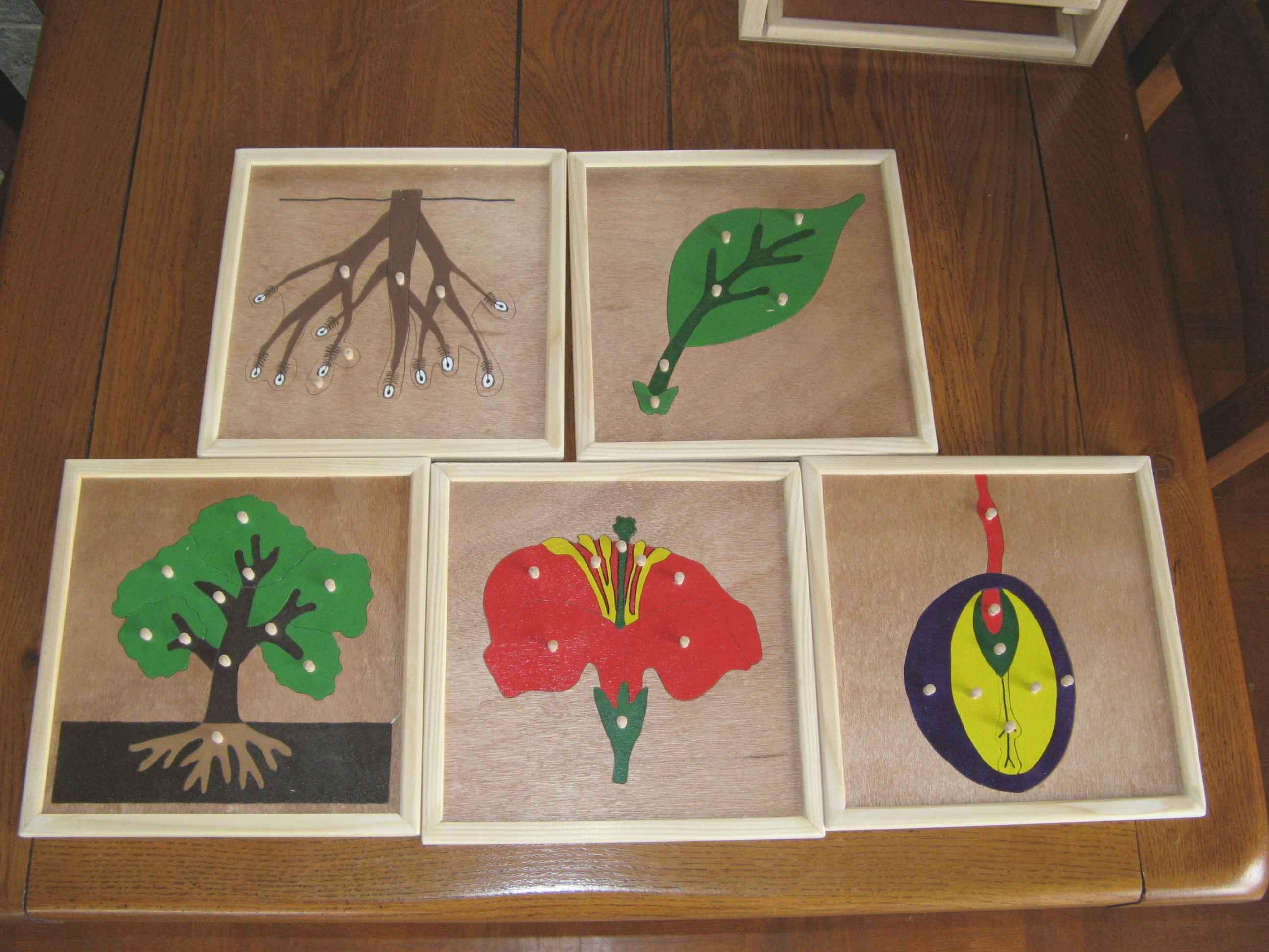 Puzzles botanique et zoologie : utilisation