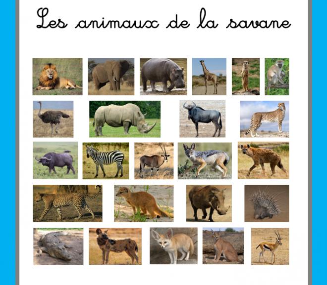 Images classifiées : les animaux de la savane