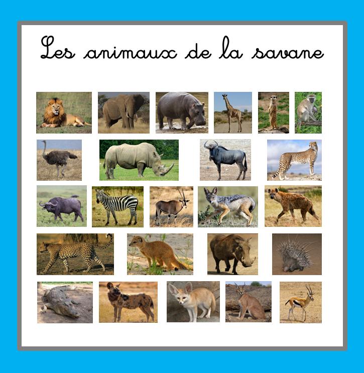Images classifi es les animaux de la savane ti 39 loustics - Felin de la savane ...