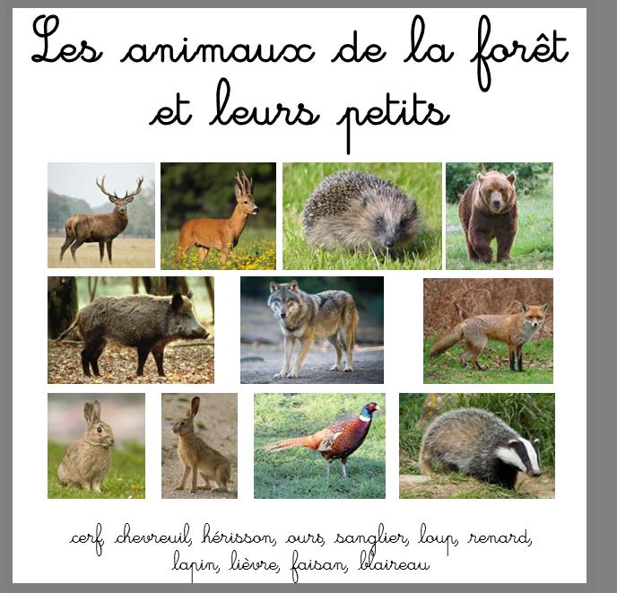 Exceptionnel Les animaux de la forêt : nom et empreintes - Ti'loustics LP84